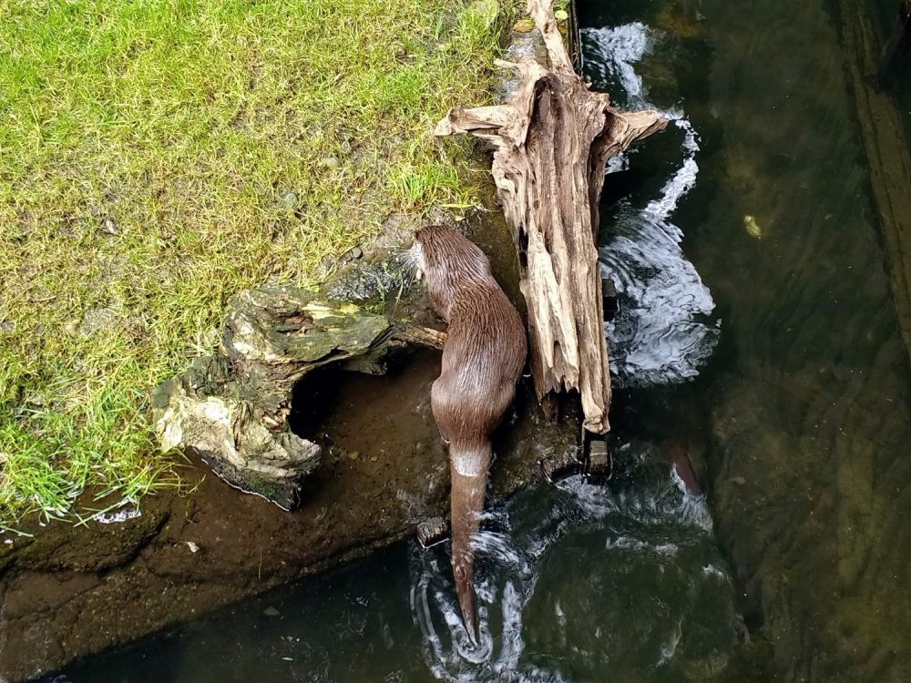 Hankensbüttel Otter Center otter